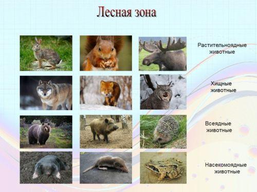 Сообщение О Лесном Животном